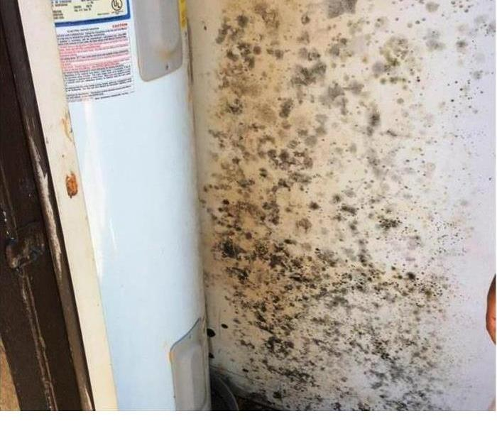 Mold Remediation Mold Damage in Gardena.
